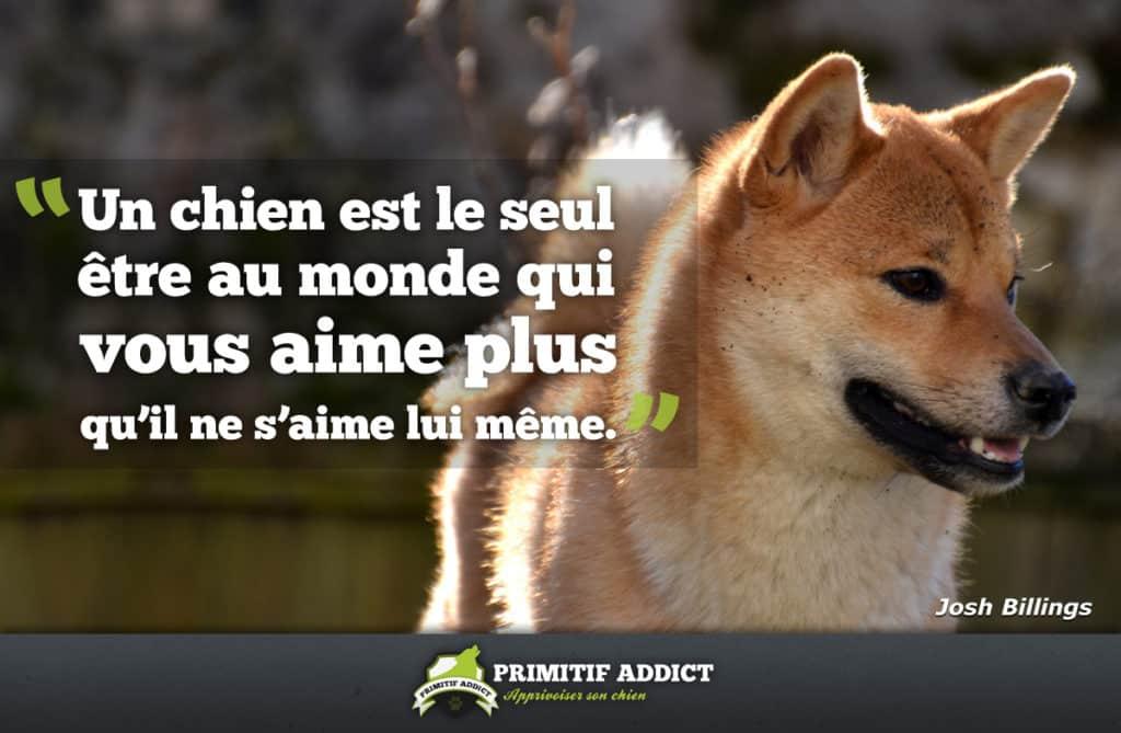 Connu citation] Un chien est le seul être au monde… SN45