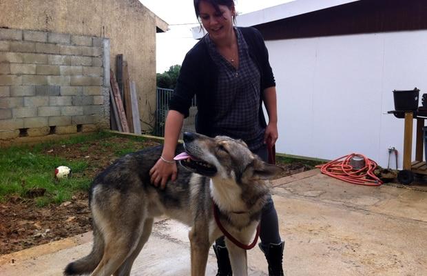 education_canine_saarloos_2