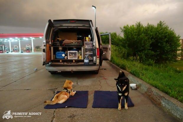 Shiba_Inu_Road-Trip