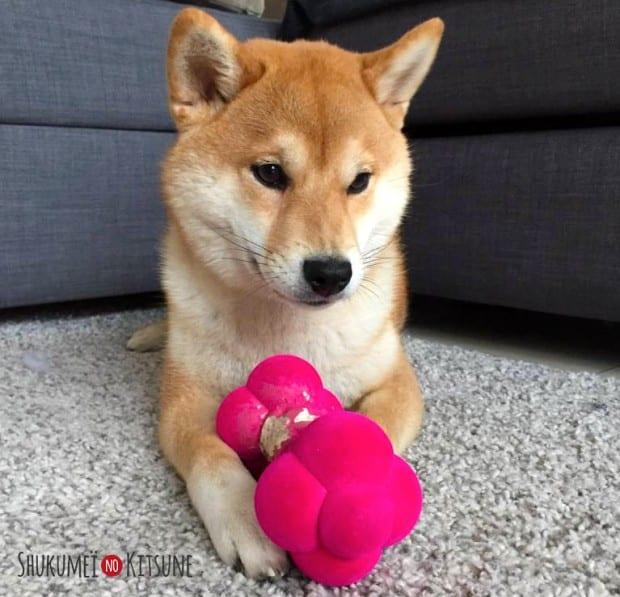 Shiba_Inu_jouet