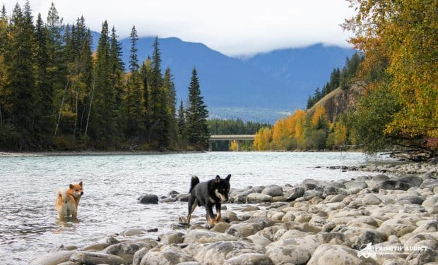 Road-Trip-Canada-Chien