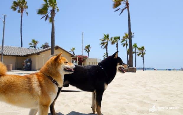 Plage spéciale chien à Long Beach en Californie