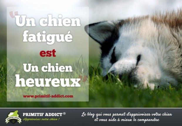 citation un chien fatigue est un chien heureux