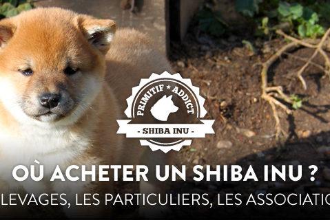 Où Acheter Un Shiba Inu Les élevages Les Particuliers