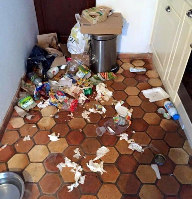 poubelle_chien