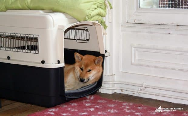 VarryKennel_Shiba_Caisse_Transport