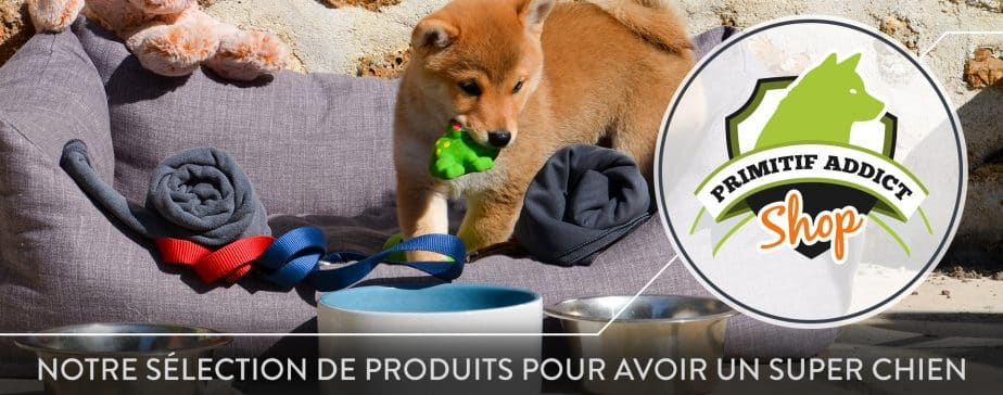 Primitif Addict - Education canine et comportement canin