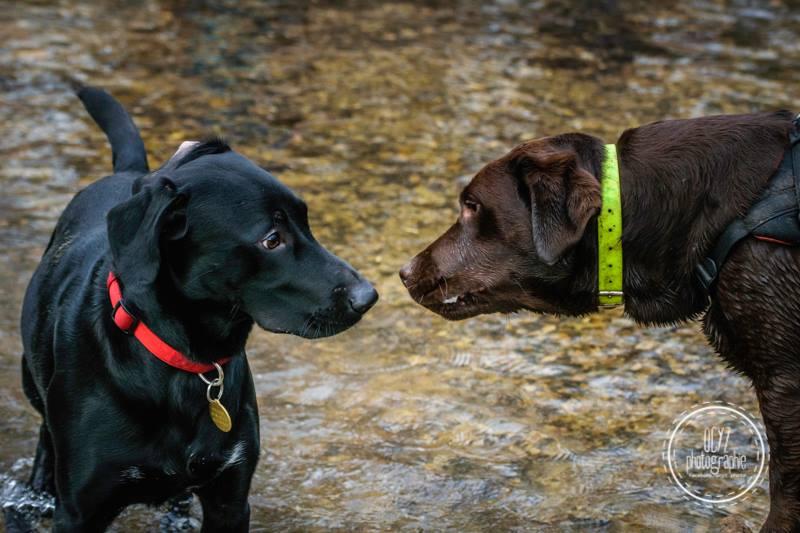 chien rencontre congenere